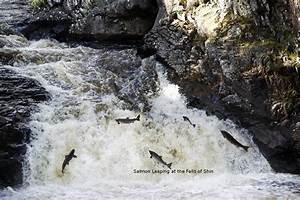 Falls Of Shin Scotland