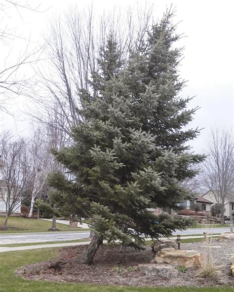 best 28 how to fix a leaning christmas tree best 28