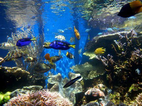 aquarium stopwatch  stopwatch  fish tank