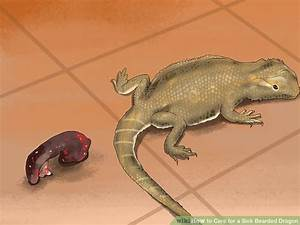 3 ways to care for a sick bearded dragon wikihow With how often do bearded dragons go to the bathroom