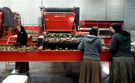 potato planting  warden hutterite colony  spokesman