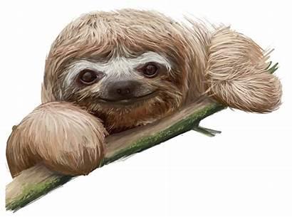 Sloth Transparent Clip Sloths Clipart Background Animals