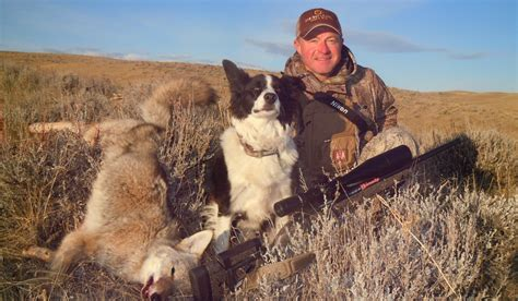 coyote hunting calling december song dogs outdoorhub