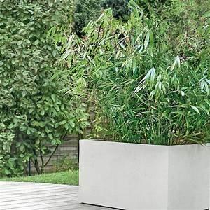 Bambou En Pot Pour Terrasse : bambou moyen fargesia 39 pingwu 39 pot de 5 litres hauteur 60 80 cm gamm vert ~ Louise-bijoux.com Idées de Décoration