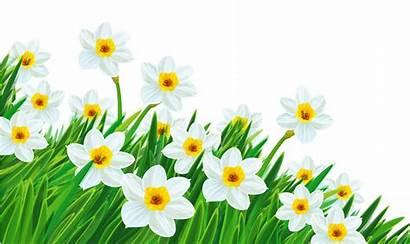 Clipart Daffodil Clipground Cliparts