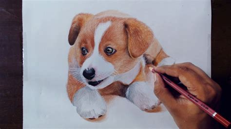 drawing animals  drawing  puppy colored pencils
