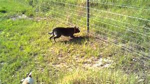 hot wire fence for dogs fence ideas With electric dog kennel