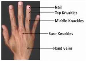 Dorsal Aspects Of Human Hand From Kvkr