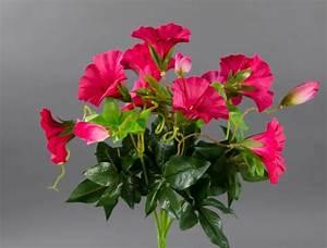 Orchideen Ohne Topf : petunienbusch 28cm pink ohne topf zf k nstliche petunie kunstblume kunstpflanze ebay ~ Eleganceandgraceweddings.com Haus und Dekorationen