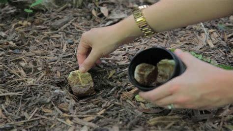 bury tea bags   garden    happen youtube