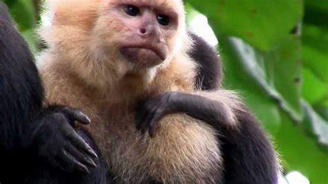 Primates- What is a Primate? - YouTube