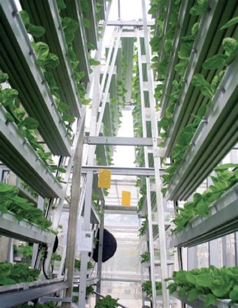 plant de cuisine les fermes verticales un premier essai commercial à