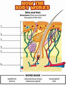 Label Parts Of Skin