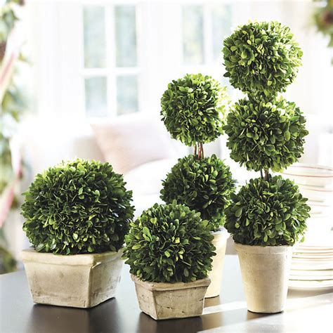 Preserved Boxwood Topiary - Traditional - Artificial
