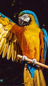 Mobile, Colourful, Bird, Wallpapers