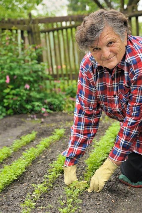 senior woman gardening weeding carrot stock photo
