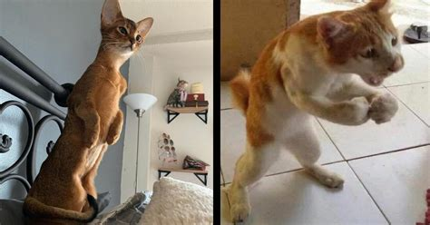 lustige bilder von katzen die auf zwei beinen stehen