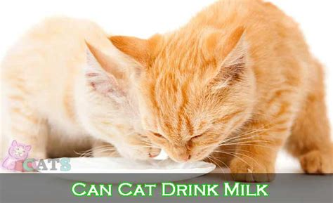 cat drink milk   give milk  cats