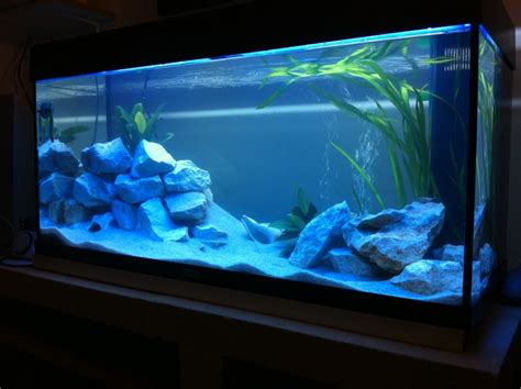 aquarium eau douce neon bleu