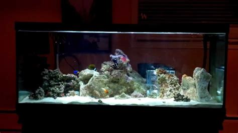 80 gallon saltwater fish only tank nano reef set up hd available