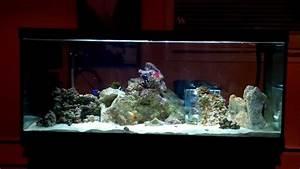 80 Gallon Saltwater Fish Only Tank  U0026 Nano Reef Set