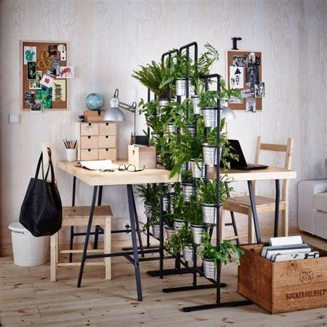 1000 id 233 es sur le th 232 me plantes de bureau sur plante de bureau plantes d int 233 rieur