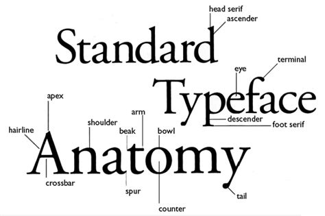 image gallery definition typography