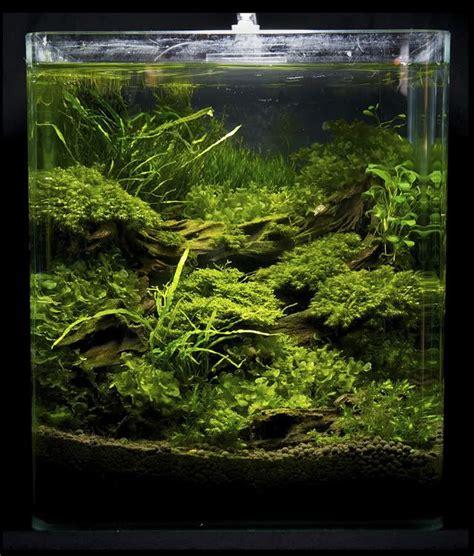 aquascaping freshwater aquarium 1235 best images about aquascape ornamental fish on