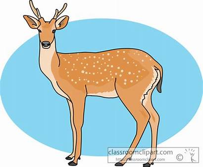 Deer Clipart Fallow Animals Mule Clipground Clip
