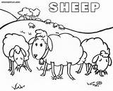 Sheep Coloring Pages Colorings sketch template