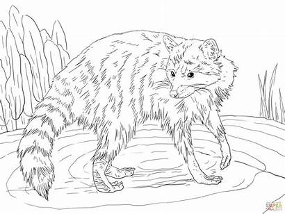 Coloring Raccoon Printable Coloringhome