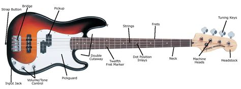 Anatomy Of An Electric Bass Guitar  Gamlin's Music Centre