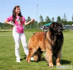 World's Largest Dog Breeds - Huge Dog Breed Names with ...