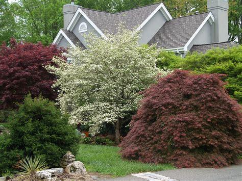 small trees for japanese garden too many trees not enough garden ramblin through dave s garden