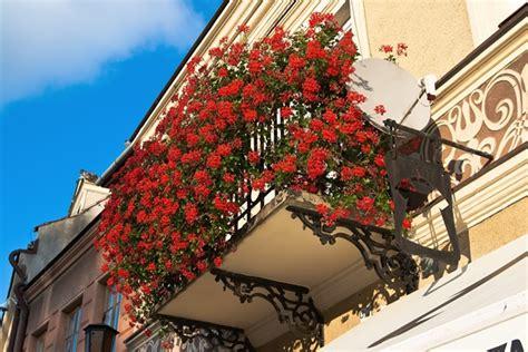 Geeignete Pflanzen Südbalkon by Balkon Gestalten Bodenbelag Sichtschutz Balkonpflanzen