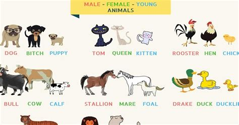 list  animal names  male female young  groups