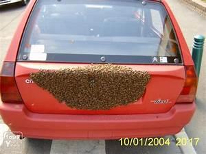 Essaim De Frelon : enlevement d 39 essaims d 39 abeilles nid de gu pes bourdons ~ Melissatoandfro.com Idées de Décoration