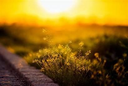 Sunlight Nature Yellow Flowers Field Depth Plants