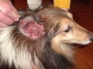 dog ear problem 27