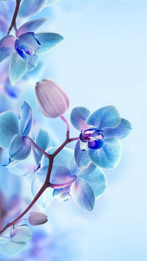 Animated Flower Wallpapers For Mobile - 3d moving wallpaper amazing animated 3d flowers mobile