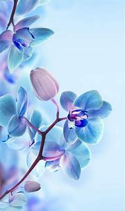 3D Flower HD Wallpapers For Mobile | Best HD Wallpapers ...