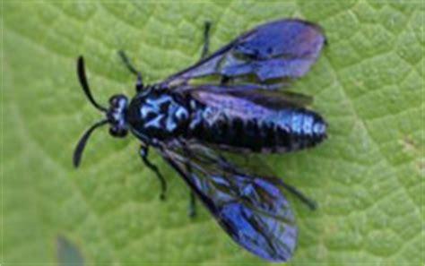 mouche bleue bello et lebreton demandent des comptes au ministre