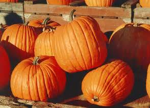 Best Pumpkin Picking In Nj by Autumn Leaf Color Wikipedia The Free Encyclopedia Ebook