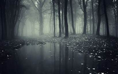 Forest Mist Smoke Nature Wallpapers Wood Spooky