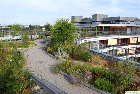 Dachbegruenung Pflanzen Fuer Die Extensivbegruenung by Die Verschiedenen Arten Der Dachbegr 252 Nung Dachgarten24