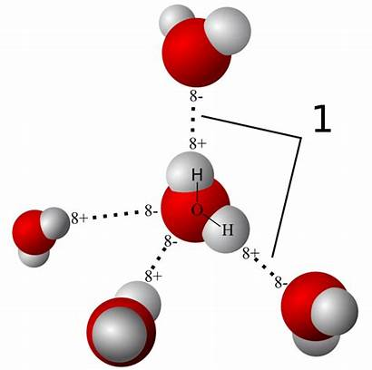Molecules Hydrogen Bonds Water Molecule Atoms Between