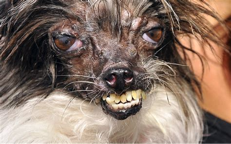 ugliest dogs in the world k9 research lab