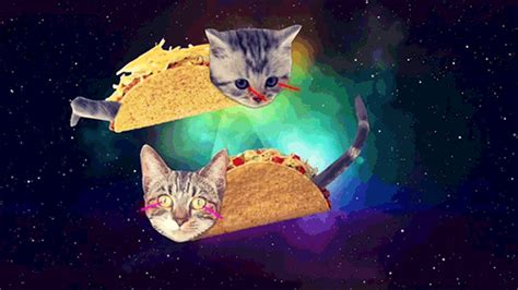 Taco Cat Cartoon