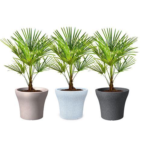 scheurich bac 224 plantes 258 quot no1 quot r 233 sistant au gel pot de fleurs ebay