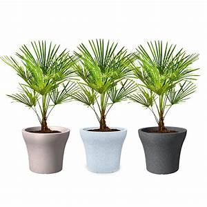 Plante D Extérieur En Pot : plante exterieur en pot resistant au gel pivoine etc ~ Teatrodelosmanantiales.com Idées de Décoration